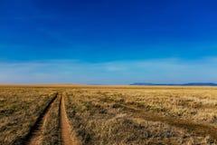 道路穿过塞伦盖蒂的草 免版税库存图片