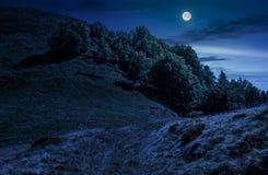 道路穿过山坡草甸的森林在晚上 免版税库存照片