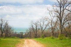 道路穿过春天公园 库存照片