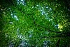 道路穿过春天森林在明媚的阳光, Bistriski Vintgar,斯洛文尼亚下 免版税图库摄影