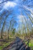 道路穿过有光秃的树的一个森林冬天 库存图片
