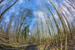 道路穿过有光秃的树的一个森林冬天 免版税图库摄影
