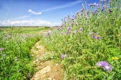 道路穿过有开花的紫罗兰色花的草甸 免版税库存图片