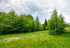 道路穿过树木丛生的象草的草甸 图库摄影