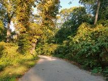 道路穿过树木繁茂区 免版税库存照片