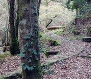 道路穿过森林加利西亚,西班牙 库存图片