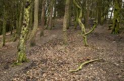 道路穿过森林在冬天 库存图片