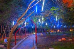 道路穿过森林在夜 库存图片