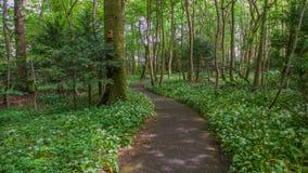 道路穿过森林地沼地 免版税库存照片
