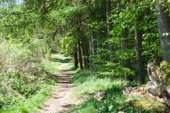 道路穿过森林沼地 免版税图库摄影