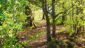 道路穿过森林沼地 免版税库存照片