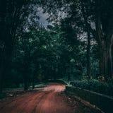 道路穿过森林 库存图片