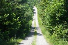 道路穿过森林 免版税库存照片