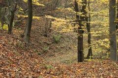 道路穿过森林 免版税库存图片