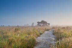 道路穿过沼泽在有薄雾的夏天早晨 库存图片