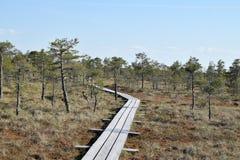 道路穿过沼泽 库存照片