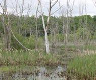 水道路穿过沼泽 免版税库存图片