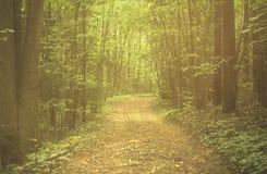道路穿过清早森林,立陶宛 免版税库存图片