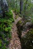 道路穿过澳大利亚雨林 库存图片