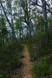道路穿过澳大利亚雨林 免版税库存图片