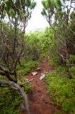 道路穿过爬行杉木 免版税库存图片