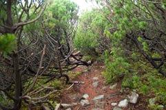 道路穿过爬行杉木 库存照片