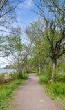 道路穿过由水的森林 免版税库存图片