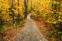 道路穿过秋天森林 图库摄影