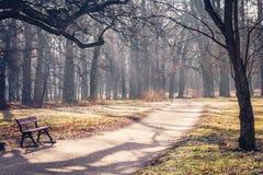 道路穿过秋季公园 免版税库存照片
