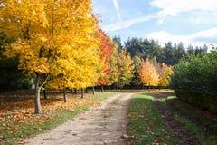 道路穿过秋季树 库存照片