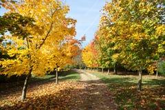道路穿过秋季树 图库摄影