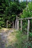 道路穿过自然 库存照片