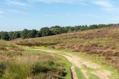 道路穿过荷兰欧石南丛生的荒野 免版税库存照片