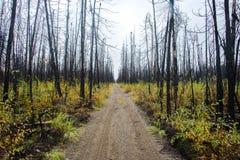 道路穿过被烧的森林 免版税库存图片