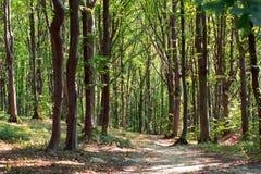 道路穿过被迷惑的绿色森林 图库摄影