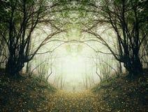 道路穿过超现实的秋天森林 库存照片