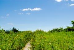 道路穿过高草和花 库存照片