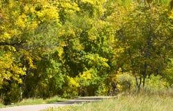 道路穿过黄色秋天叶子 免版税库存照片