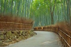 道路穿过Arashiyama竹森林在日本 免版税库存图片