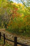 道路穿过colorfull森林在秋天 库存图片