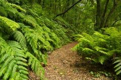 道路穿过Los蒂洛斯岛雨林在拉帕尔玛岛的 免版税库存照片