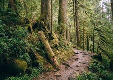 道路穿过Mt 面包师Snoqualmie国家森林 免版税库存图片