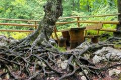道路穿过Savica瀑布的森林 库存图片