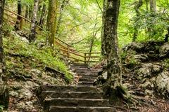 道路穿过Savica瀑布的森林 免版税库存图片