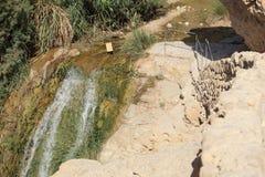 道路&小河在Ein Gedi绿洲,以色列 库存照片