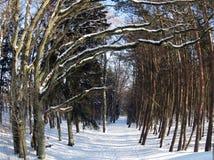 道路nd多雪的树在冬天森林,立陶宛里 图库摄影