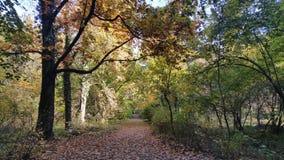 道路thourgh公园 免版税库存照片