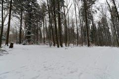 道路throug一个多雪的森林在冬天 免版税库存照片