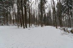 道路throug一个多雪的森林在冬天 图库摄影