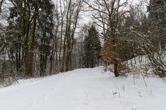 道路throug一个多雪的森林在冬天 库存图片